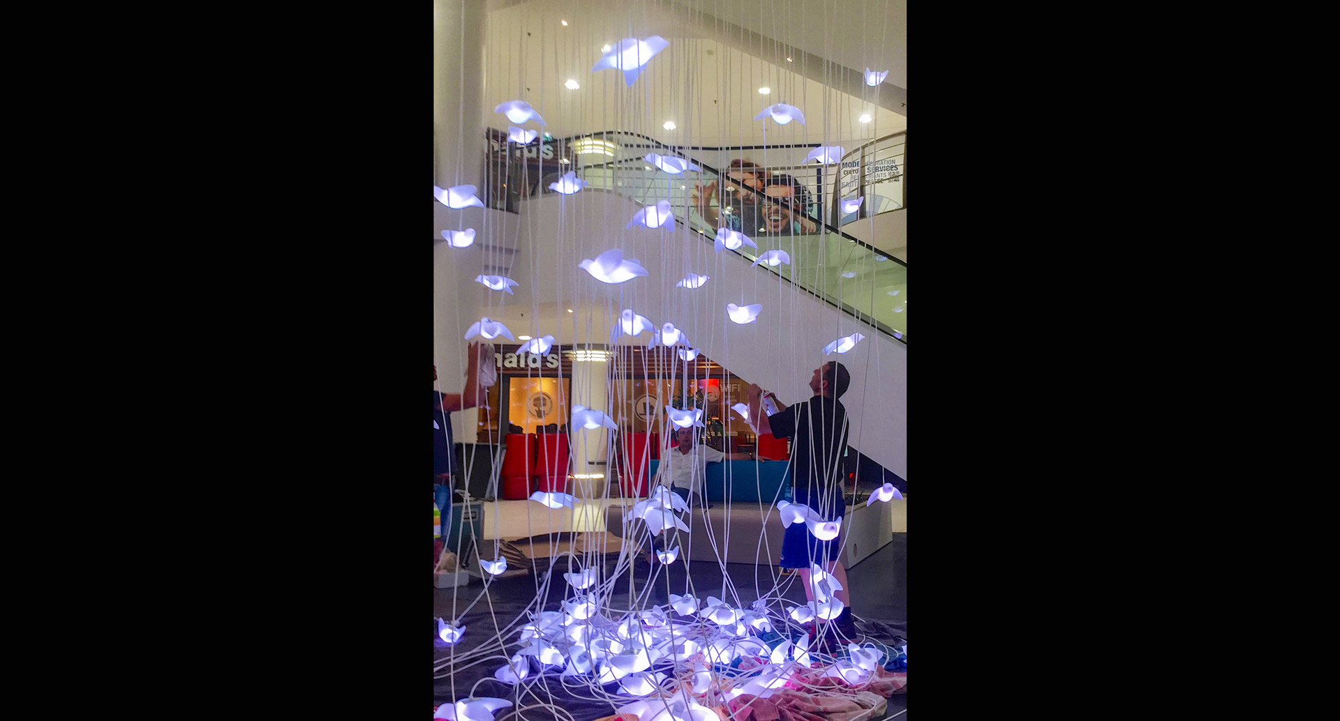 Photo of the installation at Bird in (f)light